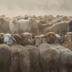 Herding SheepKashgar, China